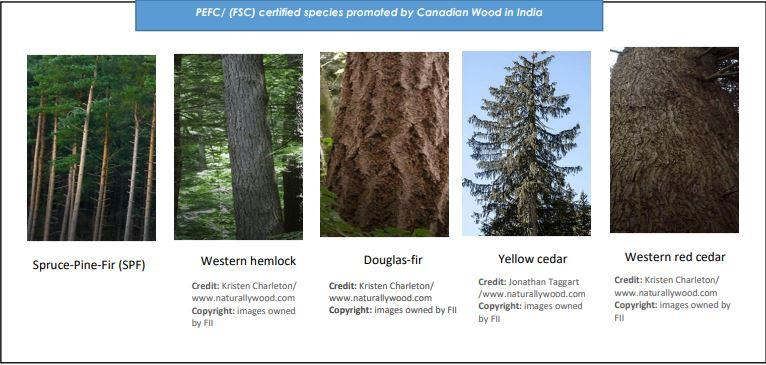 Canadian Wood Varieties