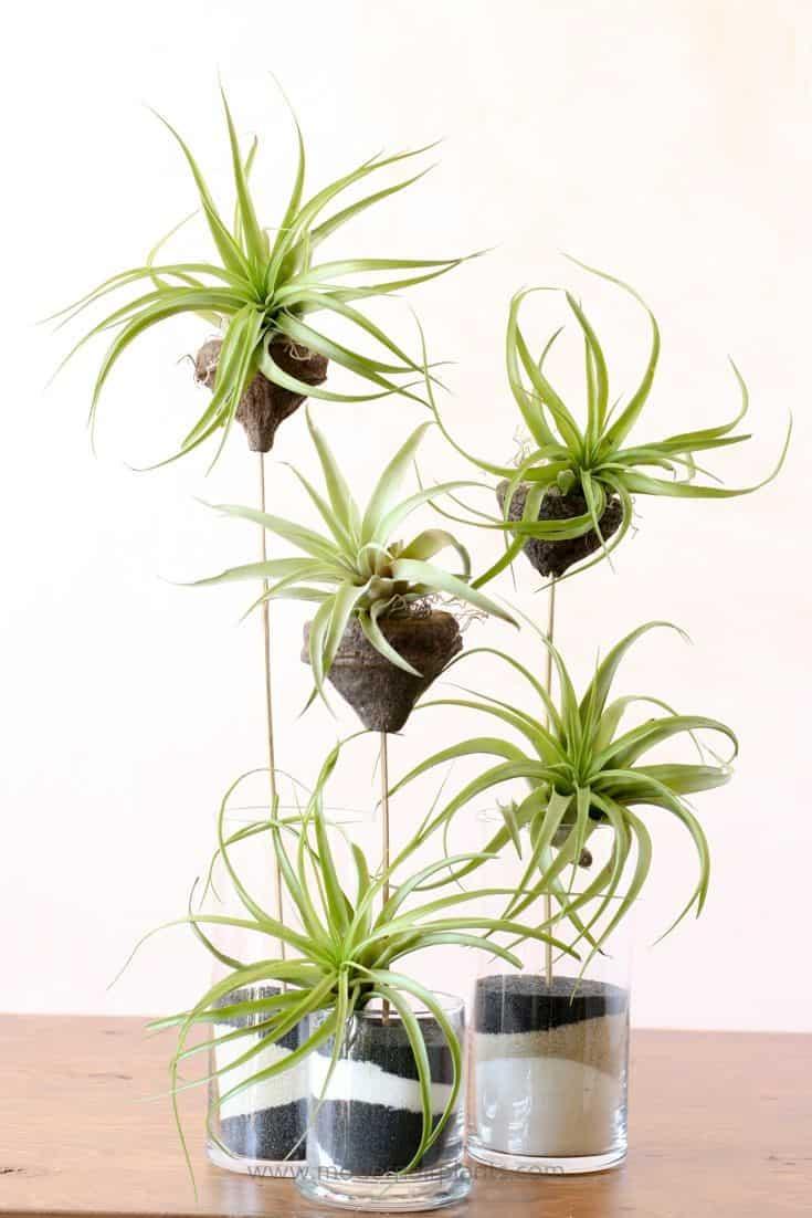 indoor air plants
