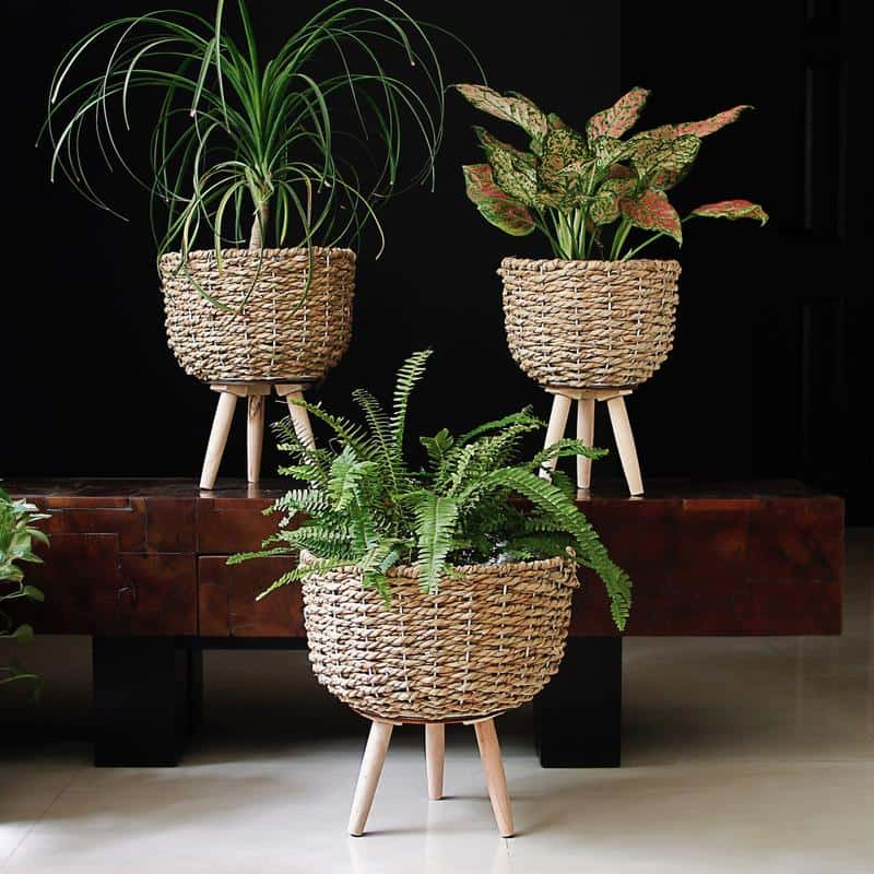 Woven Pot on Stand by Mora Taara suitable for bonsai