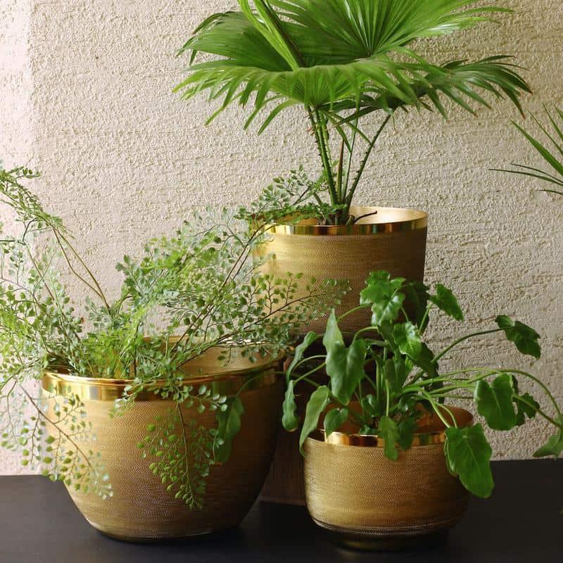 Brass Ridged Planter by Mora Taara suitable for bonsai