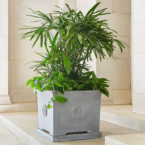 Florentine Planter by Pennoyer Newman suitable for bonsai