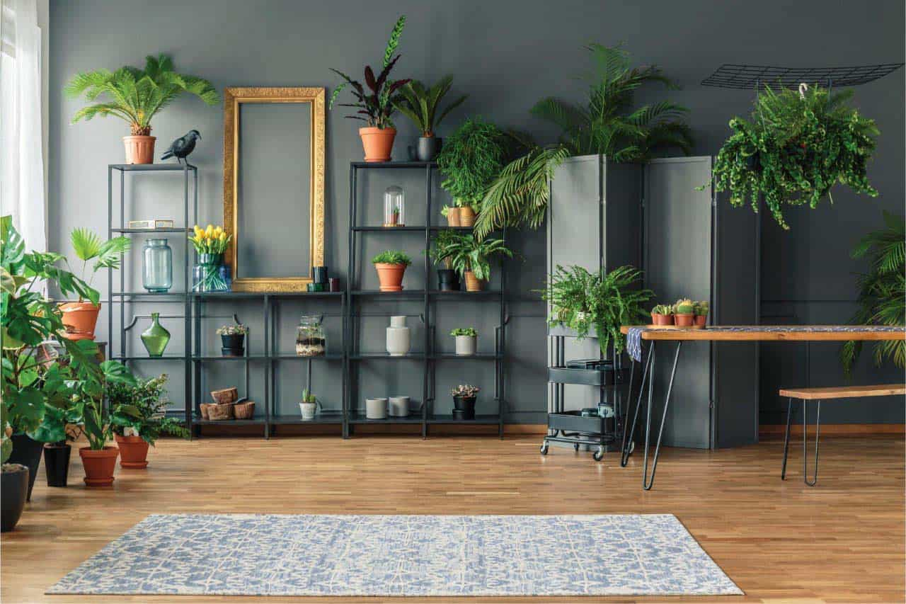 SavvyCube garden shelf suitable for bonsai and other houseplants