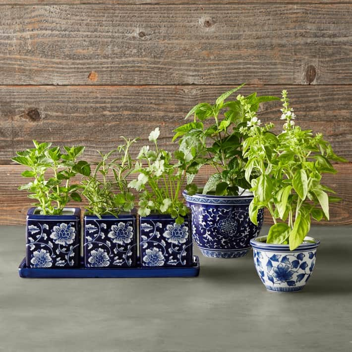 blue and white ceramic pot for indoor plant also suitable for bonsai