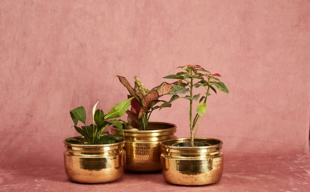 Golden hammered brass planters for indoor plants and bonsai