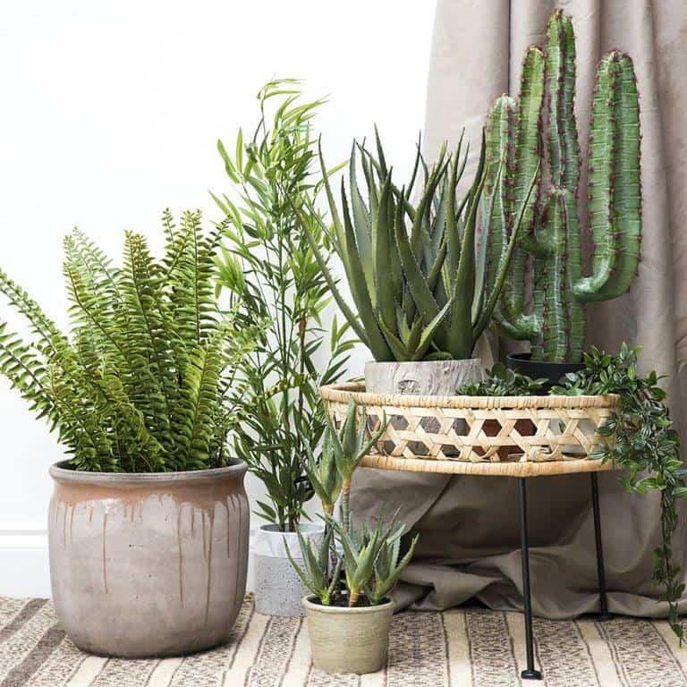 faux potted desert cactus; artificial plants, bonsai